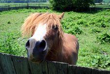 Free Horse Stock Photography - 1860042