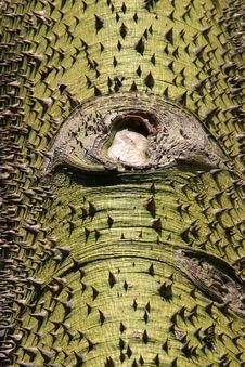 Free Spiky Tree Stock Image - 1860921