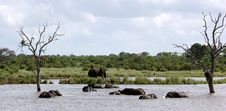 Free Elephant Water Ballet Panorama Stock Images - 1861774