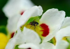 Free Fly In Flower Stock Image - 1866621