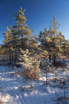 Free Winter Dream-2 Royalty Free Stock Photos - 1868148