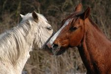 Free Horse Lovers Stock Images - 1868944