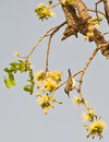 Free A Beautiful Sunbird Looking For Nectar Stock Photography - 18601732