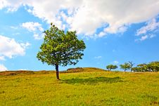 Free Lonely Tree In Summer Stock Photos - 18602683