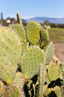 Free Cactus Stock Image - 18602721