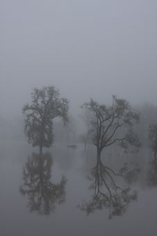 Free Fog On The Laguna De Santa Rosa Stock Photos - 18602783