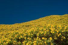 Free Wild-sunflower On Mountain Stock Photography - 18603072