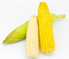 Free Fresh Corn Stock Image - 18604801