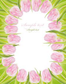Free Pink Tulips Royalty Free Stock Photos - 18605198