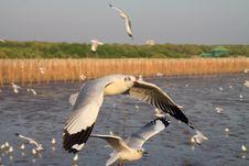 Free Seagull Stock Photos - 18605733