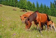 Free Horse On A Hillside Stock Images - 18605844
