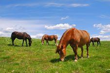 Free Horse On A Hillside Stock Photos - 18605863