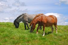 Free Horse On A Hillside Stock Image - 18605891