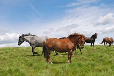 Free Horse On A Hillside Stock Image - 18605921