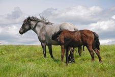 Horse On A Hillside Royalty Free Stock Photos