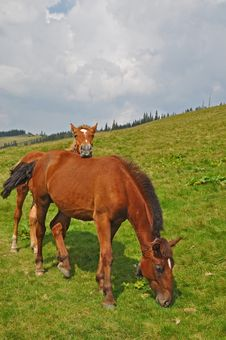 Free Horse On A Hillside Royalty Free Stock Images - 18606109