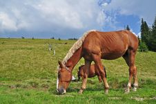 Free Horse On A Hillside Royalty Free Stock Photo - 18606125