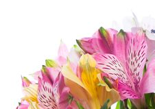 Free Bunch Of Alstroemeria Flowers Stock Image - 18608901