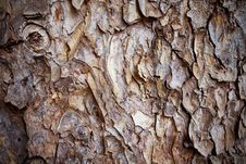 Old Bark Pattern Stock Photos