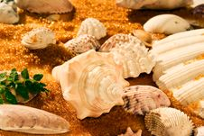 Free Shells On Golden Sand 01 Stock Photo - 18612710