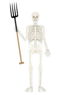 Vector Skeleton Of The Person With A Pitchfork Stock Image