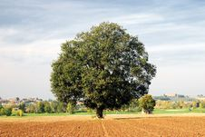 Free Oak In Countryside Stock Photos - 18612923