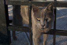 Free Curious Cat Stock Photos - 18618383