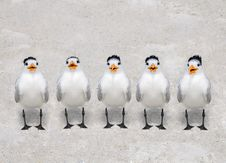 Free Singing Terns Royalty Free Stock Photos - 18619108