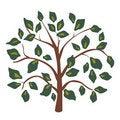 Free Green Leaf Tree Royalty Free Stock Image - 18622346