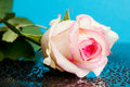 Free Pink Rose On Blue Stock Photos - 18627393