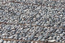 Free Drying Fish Stock Image - 18620351