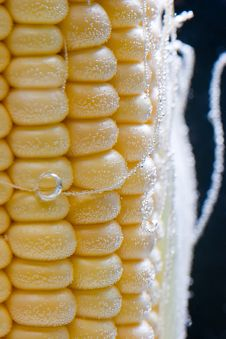 Corn In Bubbles Royalty Free Stock Image