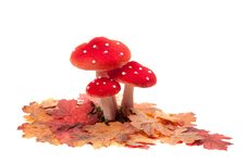Free Red Dotted Decoration Mushrooms Royalty Free Stock Images - 18624589