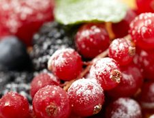 Free Berry Royalty Free Stock Image - 18625346
