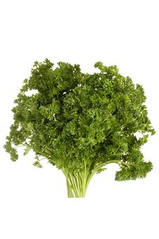 Free Curly Parsley Stock Images - 18625454