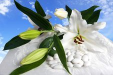 Free Weeding Candy Stock Image - 18626981