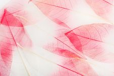 Free Leaves Royalty Free Stock Image - 18627326