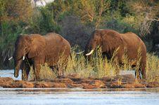 Free Elephants Stock Photo - 18628640