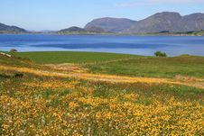 Landscape With Flowers Near Water Royalty Free Stock Photos