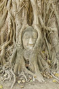 Free Stone Buddha Head In The Tree Roots, Stock Photos - 18632043