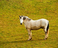Free Horses On A Pasture Royalty Free Stock Photography - 18636607