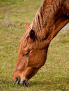 Free Horses On A Pasture Royalty Free Stock Photography - 18636657