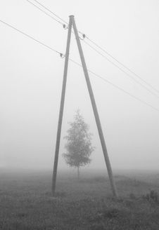 Free The Tree In A Fog Stock Photo - 18630410