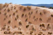 Free Desert Dune Grass Royalty Free Stock Photography - 18632257