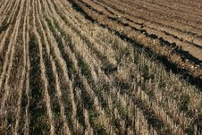 Free Field Of Stubbles Stock Photography - 18632492