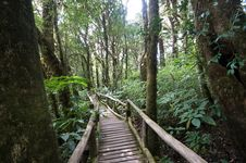 Free Footpath In Forest Royalty Free Stock Photography - 18634107