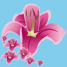 Free Lily Theme Stock Photos - 18634303