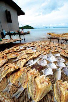 Free Dried Fish Royalty Free Stock Photos - 18635028