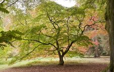 Free Trees In The Autumn Stock Images - 18636204