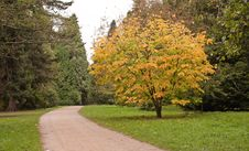 Free Trees In The Autumn Stock Images - 18636264